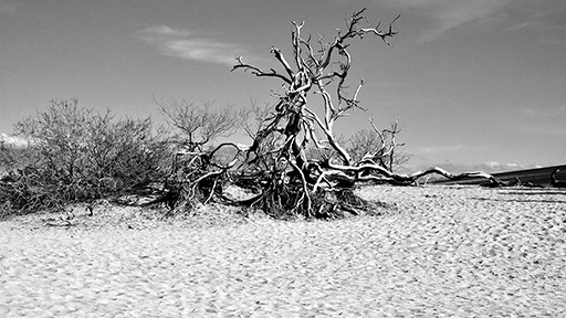A tree in the desert, black and white photo © Patrick Forian